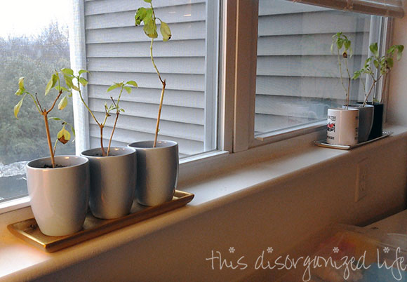 windowsill-garden-available-space